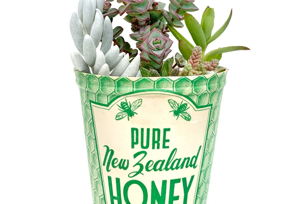 A charming vintage NZ waxed honey tub filled with colourful succulents
