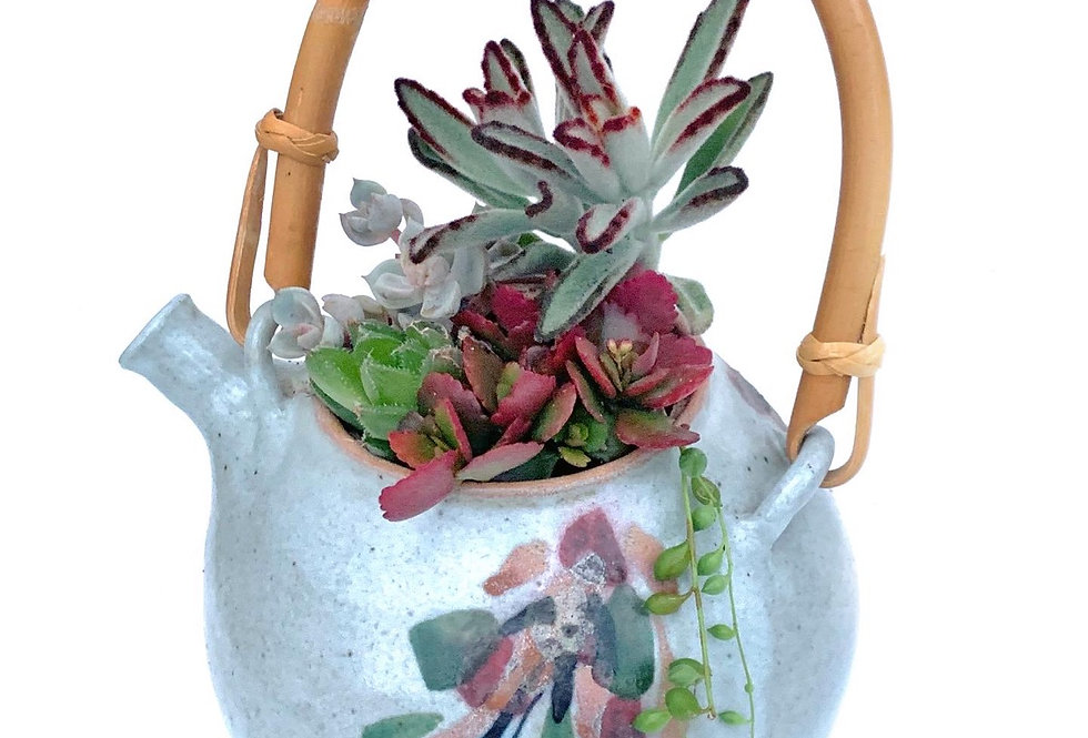 Beautifully shaped and design teapot full with colourful succulents