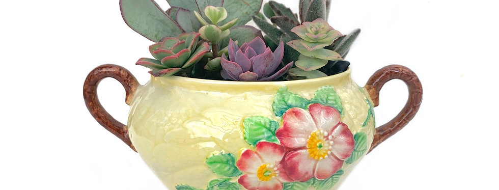 A beautiful vintage 'Carltonware' bowl filled with colourful succulents