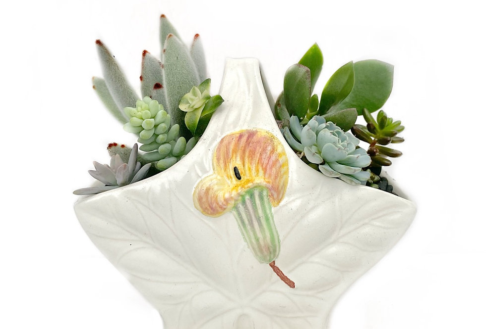A lovely vintage Shorter and Sons vase filled with colourful succulents