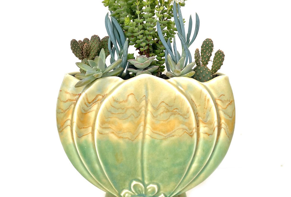A stunning NZ Titian vintage vase filled with colourful succulents