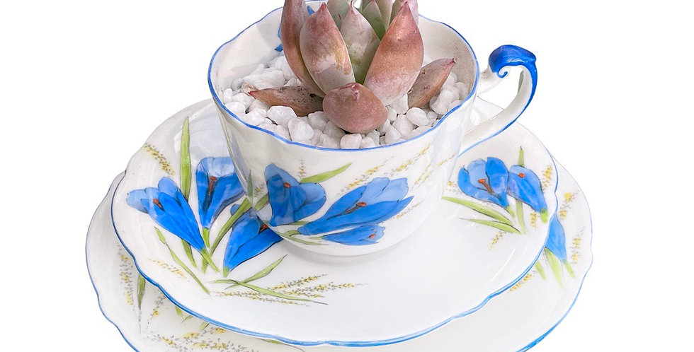 A stunning vintage teacup trio filled with a happy succulent