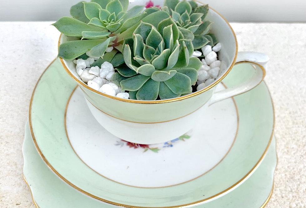 A beautiful vintage tea set with colourful succulents.