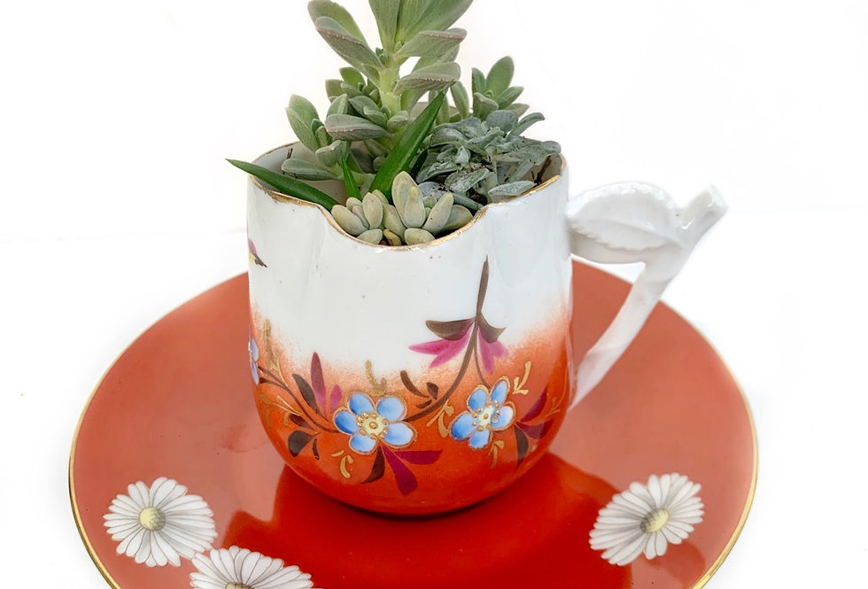 Lovely red vintage teacup and saucer with a variety of succulents