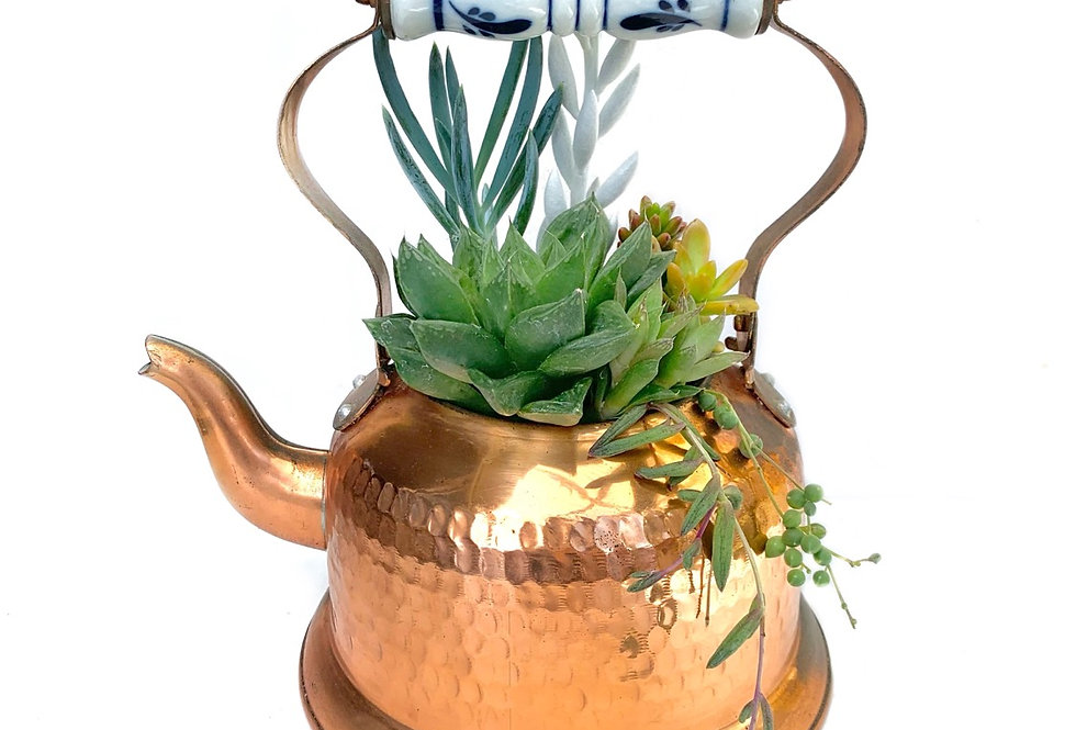 A gorgeous vintage copper teapot filled with colourful succulents