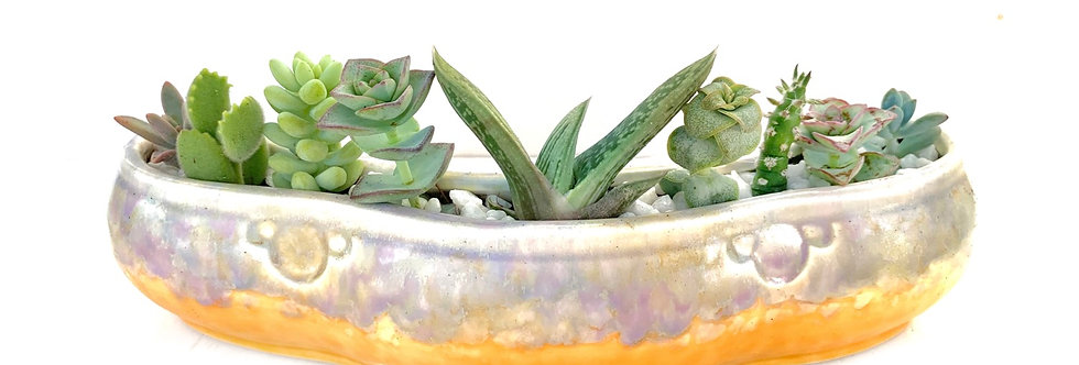 Stunning vintage Beswick posy vase filled with colourful succulents