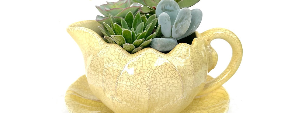 A lovely vintage Carltonware gravy boat filled with colourful succulents