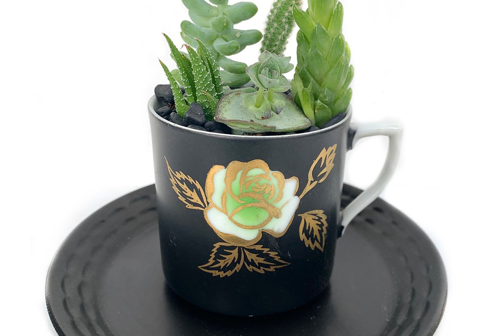 A lovely black & flower design teacup set with a variety of succulents