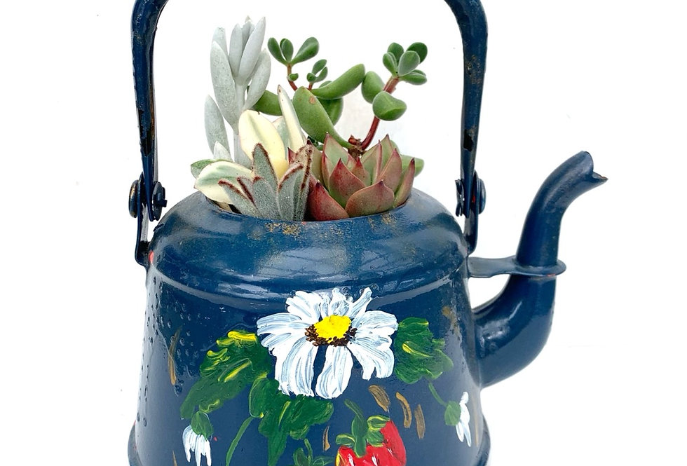 A very pretty hand painted enamel teapot filled with colourful succulents