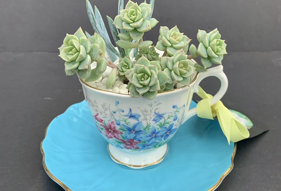 Beautiful rich blue teacup and saucer with succulents