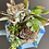 Thumbnail: A beautiful blue checkered teapot filled with colourful succulents