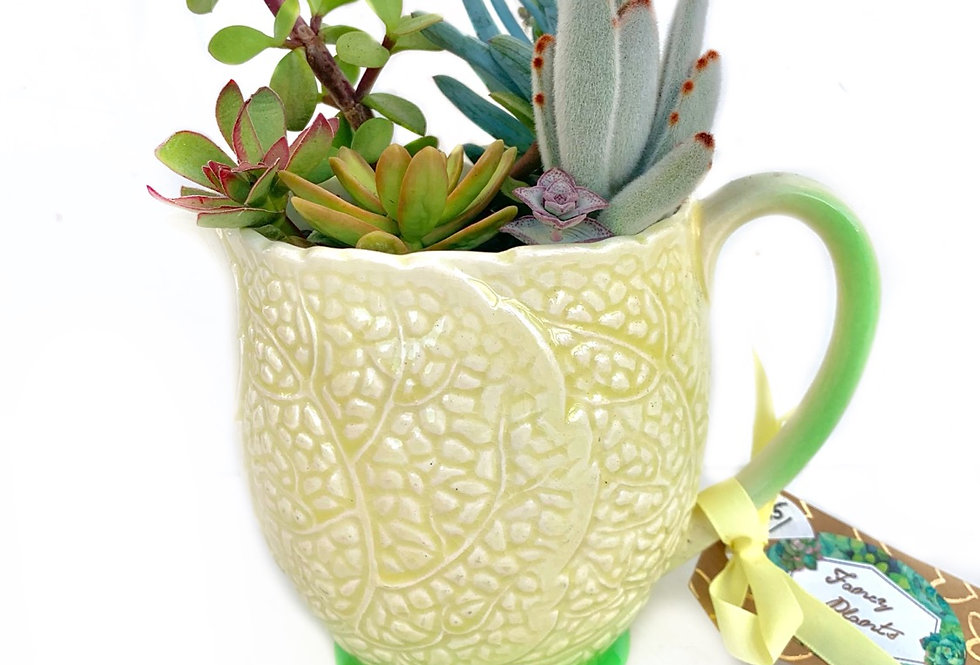 A beautiful yellow Sylvac jug filled with colourful succulents