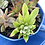 Thumbnail: A stunning blue vintage teacup set filled with a variety of colourful succulents