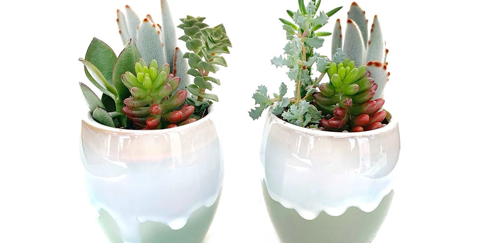 A pair of gorgeous glazed vases filled with colourful succulents