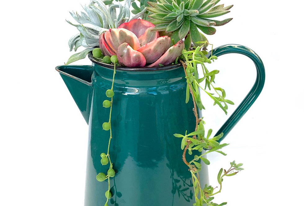 Gorgeous green large enamel coffee pot full with colourful succulents