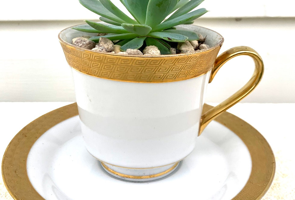 A matching gold rimmed teacup and saucer with succulent