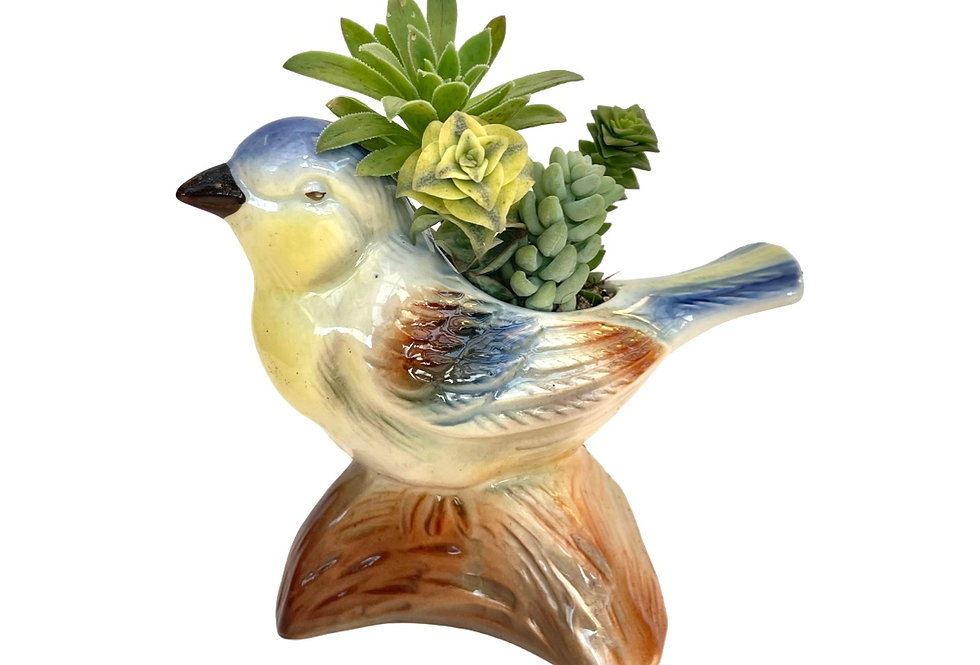 A beautifully glazed vintage bird vase filled with succulents