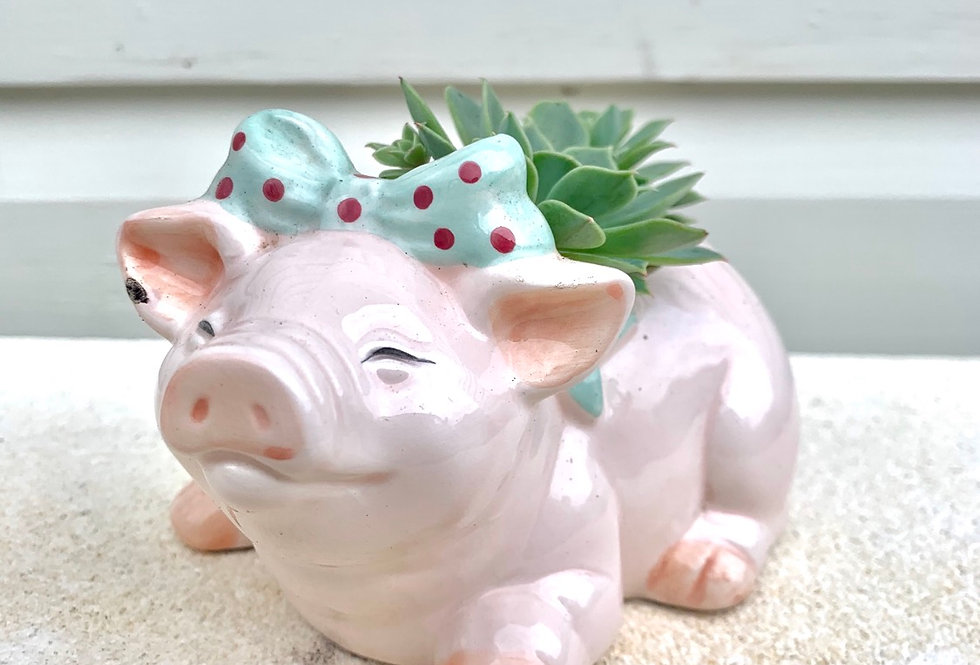 A very cute pig vase with succulents