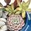 Thumbnail: Gorgeous enamel teapot filled with colourful succulents