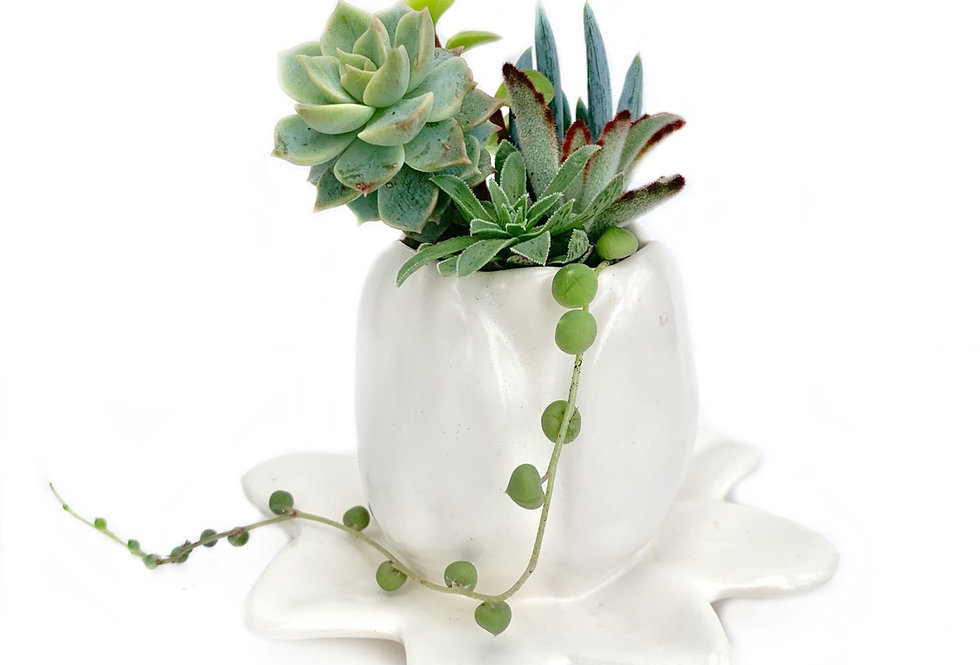 Vintage flower style vase filled with a selection of succulents