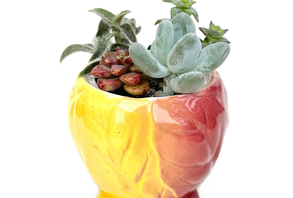 A beautiful vintage Royal Winton sugar bowl filled with colourful succulents
