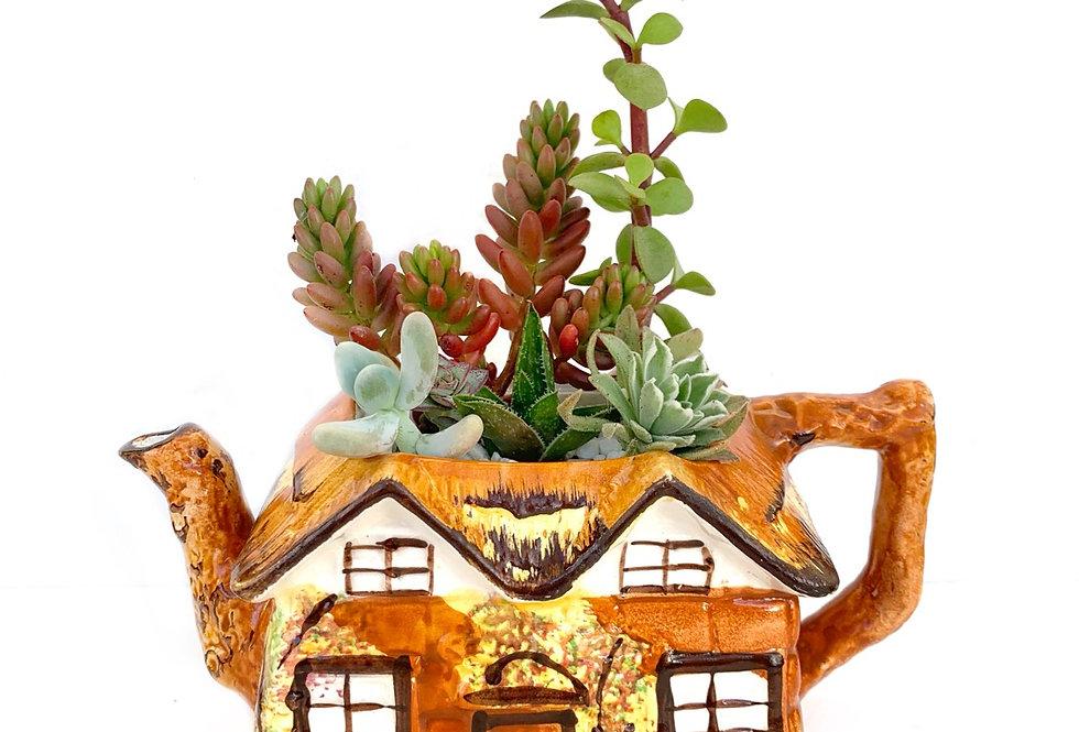 A very quaint large vintage cottage teapot filled with colourful succulents