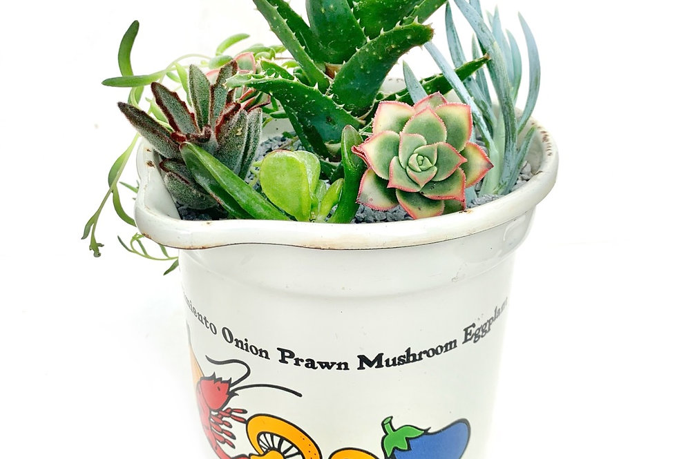 A quirky large retro enamel jug filled with colourful succulents