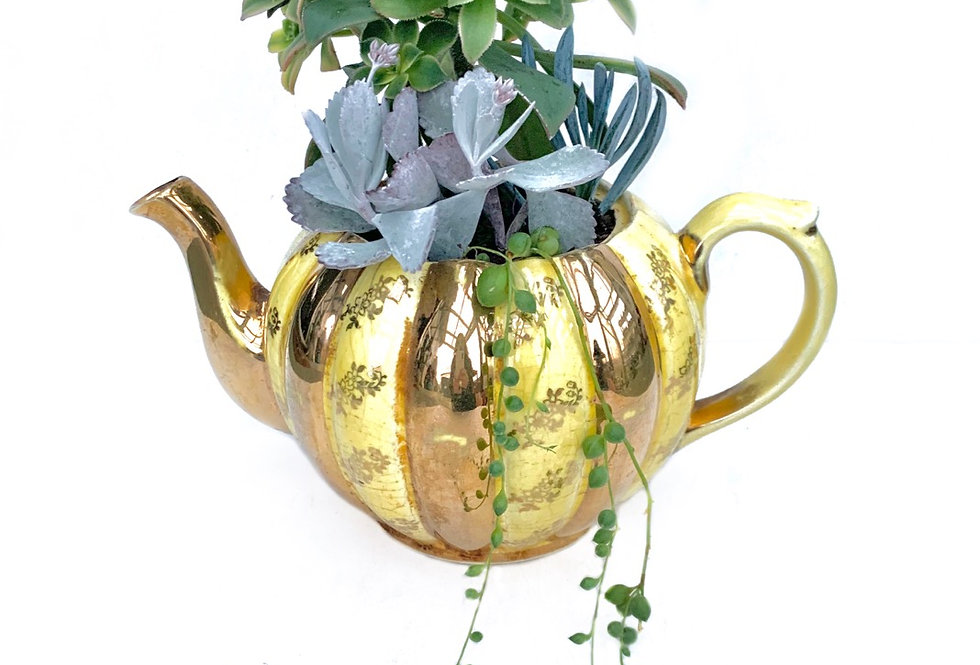 Stunning gold and yellow vintage teapot full with colourful succulents