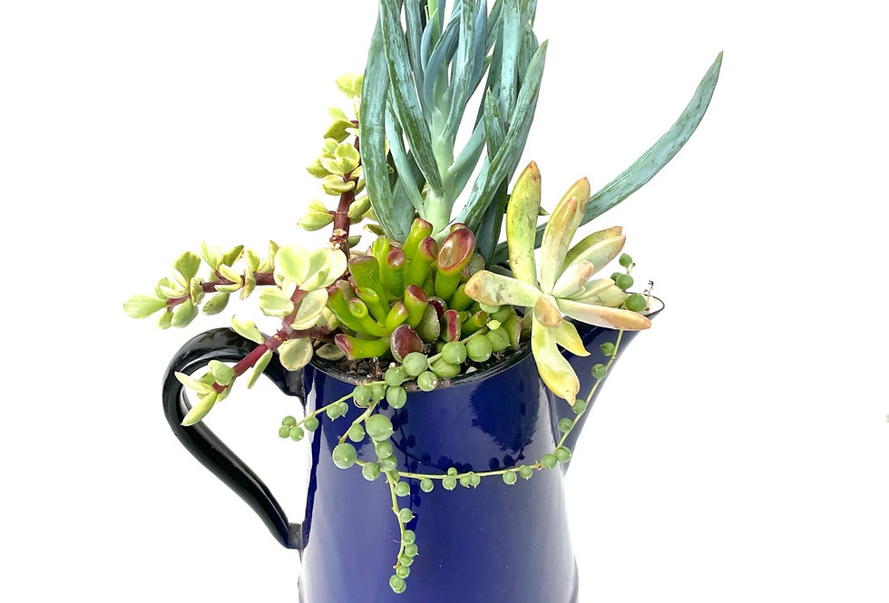 A delicious dark blue enamel coffee pot filled with colourful succulents