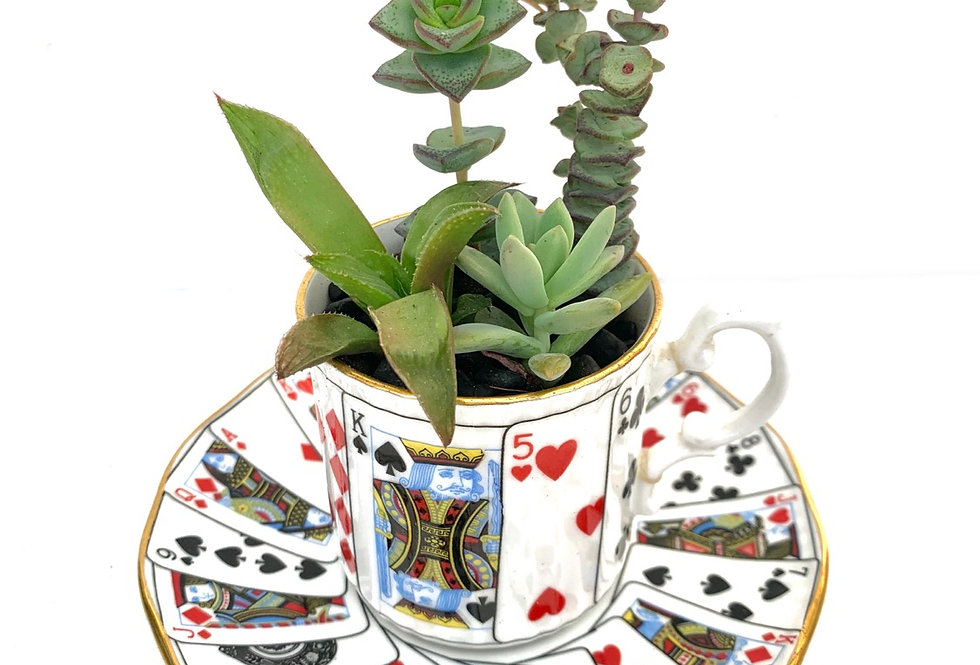 A small funky playing card teacup and saucer with succulents