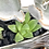 Thumbnail: A very cute squirrel and log design vase full with colourful succulents