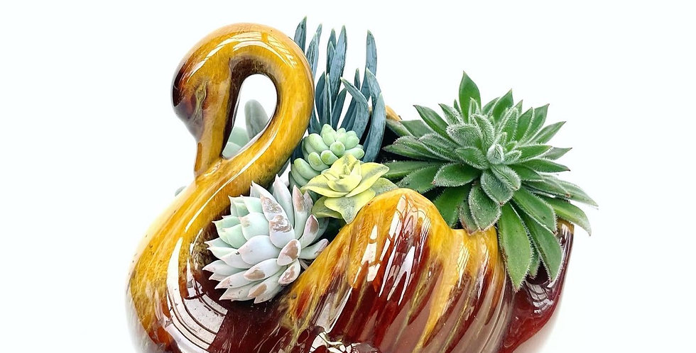 A beautiful Blue Mountain Swan vase filled with a variety of succulents