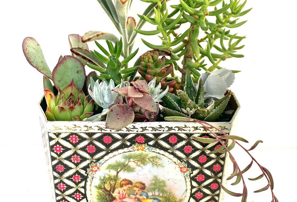 A lovely design large vinatge tin filled with colourful succulents