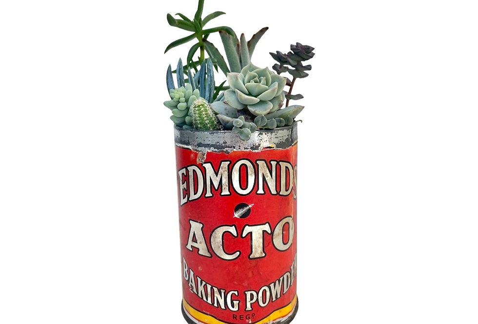 A lovely vintage Edmonds tin filled with colourful succulents