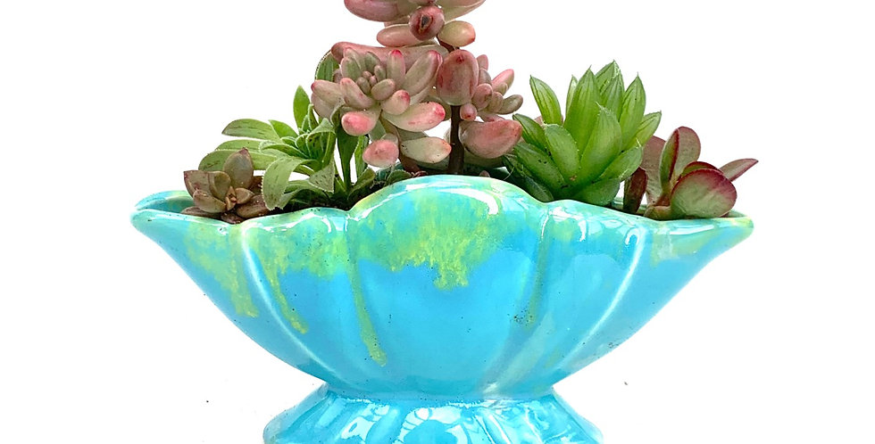 Beautiful blue standing vase filled with colourful succulents