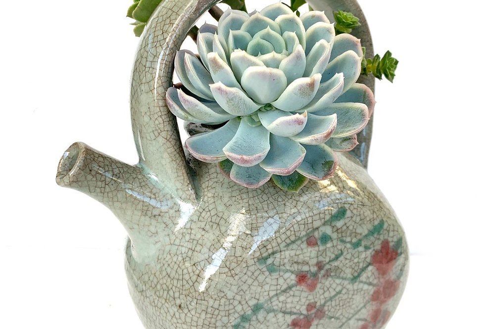A beautiful large Japanese style teapot filled with a selection of succulents