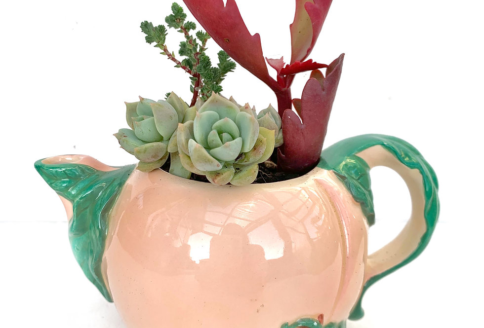 Cute as little pink and green jug/teapot with a collection of succulents
