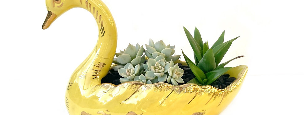 A stunning vintage yellow and gold swan filled with colourful succulents