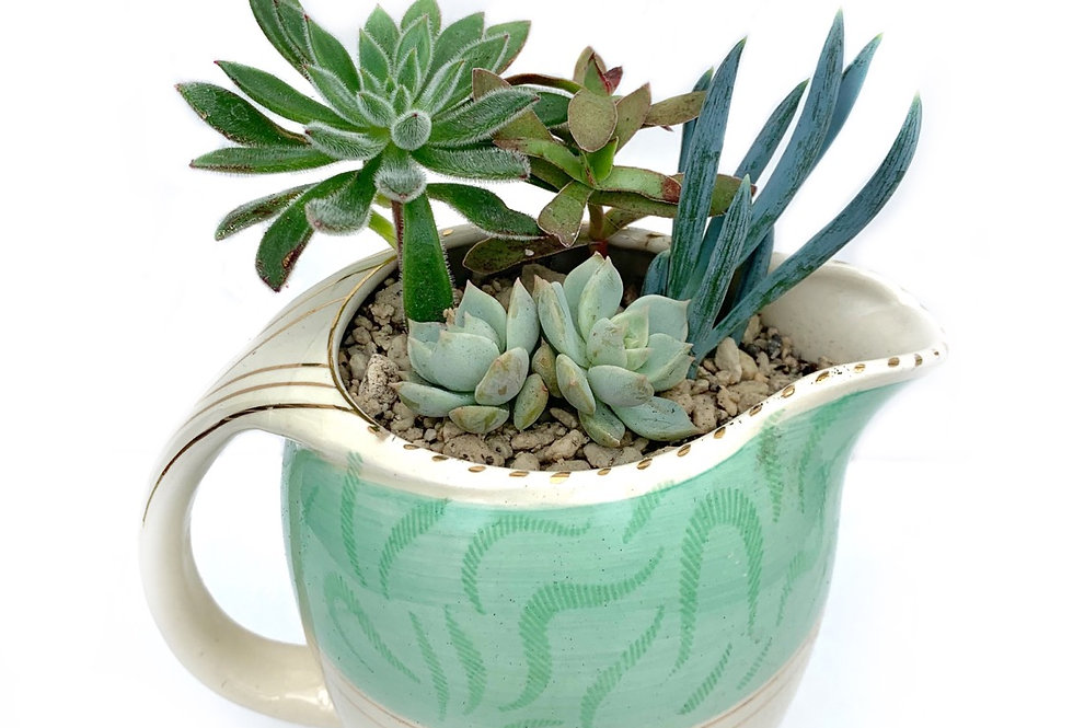 A large beautiful vintage Burleigh jug with a selection of colourful succulents