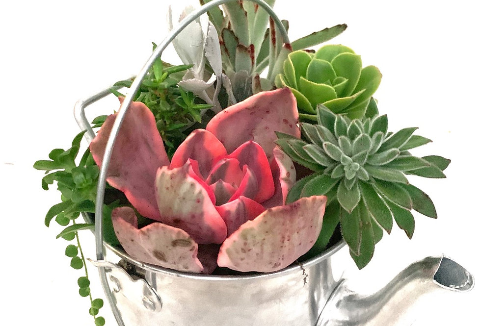 Lovely metal teapot with handle filled with a selection of colourful succulents