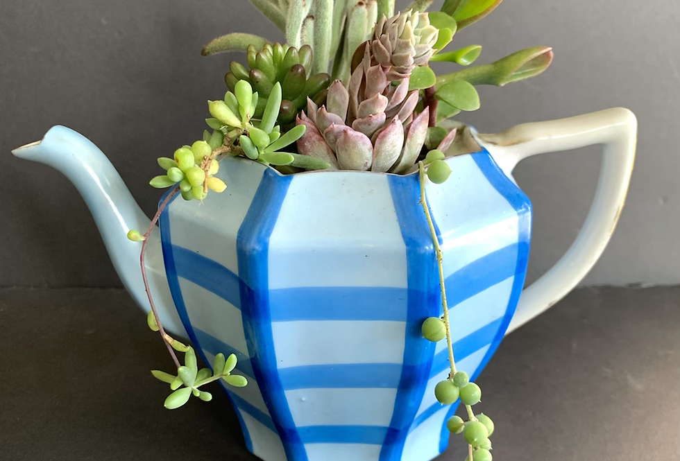 A beautiful blue checkered teapot filled with colourful succulents