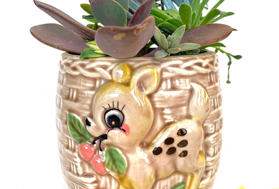 A adorable vinatge Japanese 'Bambi' biscuit barrel full with succulents.