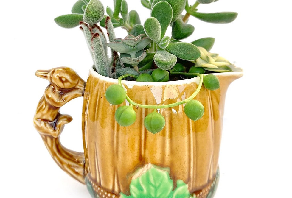 Cute Squirrel Handled vintage jug filled with colourful succulents