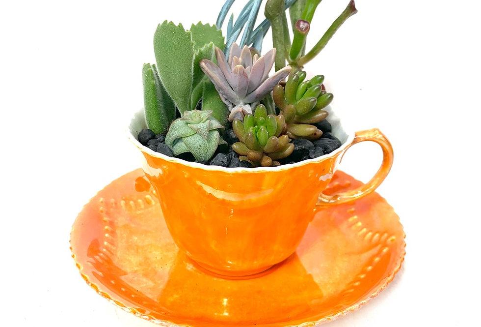 Bright orange vintage teacup set filled with colourful succulents