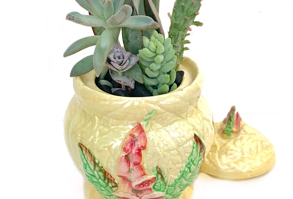 A lovely vintage Carltonware sugar pot filled with colourful succulents