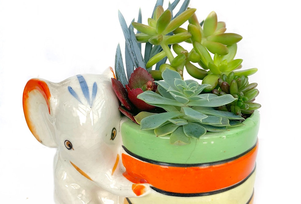 Cute colourful Elephant vase filled with a variety of succulents