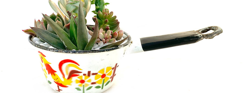 A retro design enamel pot filled with colourful succulent