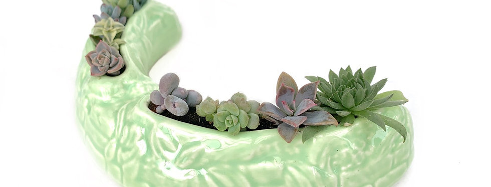 Vintage 'Sylvac' posy vase filled with colourful succulents
