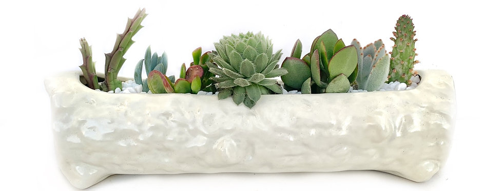 A beautiful big vintage Temuka trough vase filled with colourful succulents