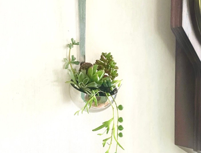 An old fashioned wooden handled ladle filled with colourful succulents